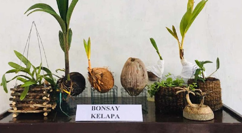 Ingin Lihat Bonsai Kelapa Juara Nasional…?