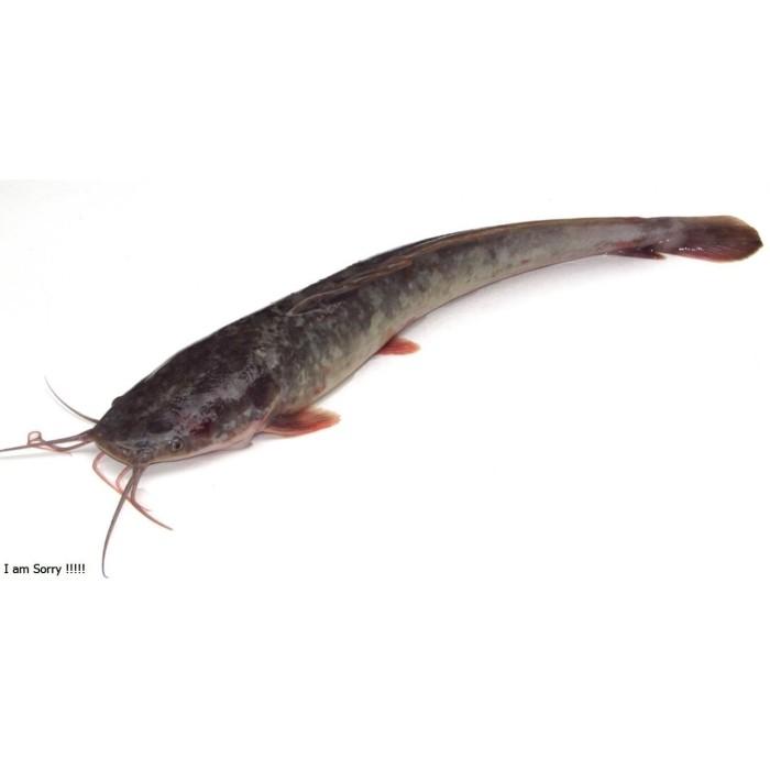 Bagaimana Menyiapkan Ikan lele pecel yang Enak Banget